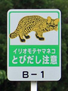 warning-sign-for-iriomote-cat