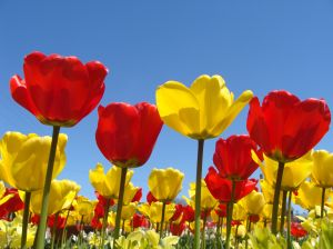 46936500-spring-flowers-pictures