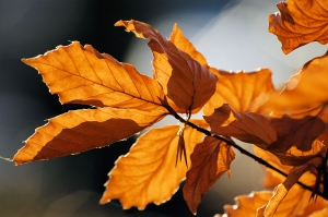 Autumn_leaves_sceenario