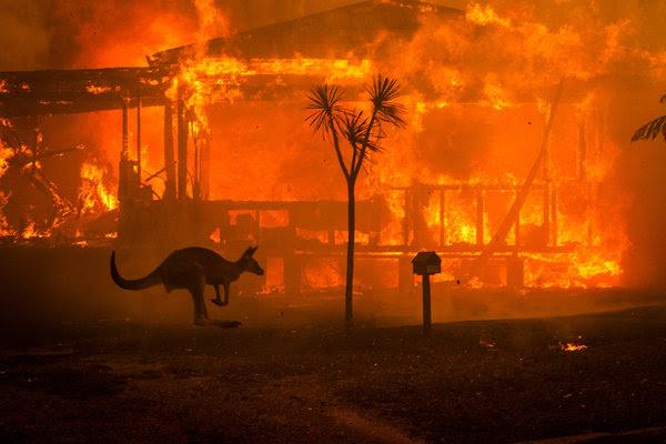kangaroo fire